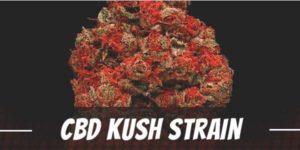 CBD Kush Strain