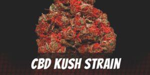 CBD Kush Strain Strain