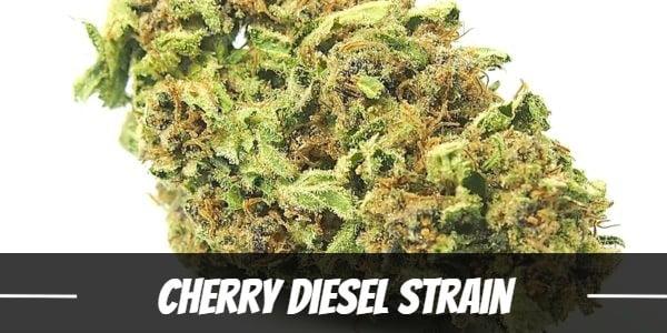 Cherry Diesel Strain