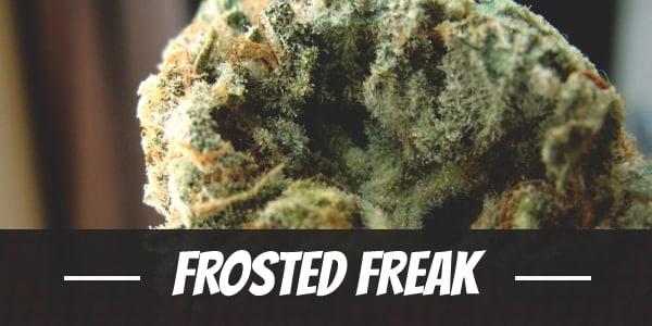 Frosted Freak Strain