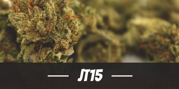 JT15 Strain