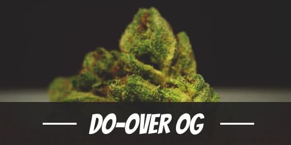 Do-Over OG Strain