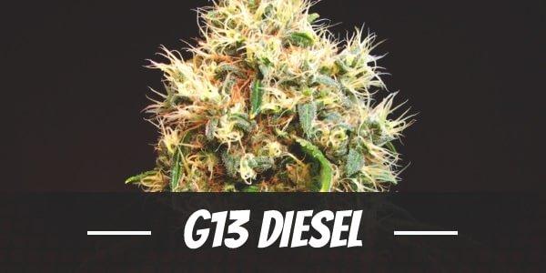 G13 Diesel Strain