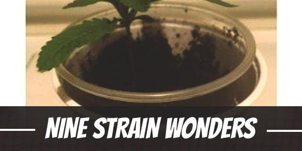 Bryan's Nine Strain Wonders in Different Growing Mediums