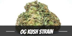 OG Kush Strain