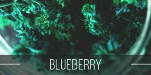 Blueberry Strain Review