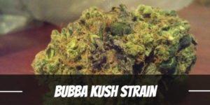Bubba Kush Strain