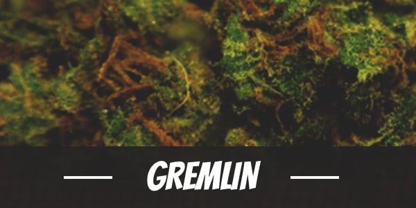 Gremlin Strain