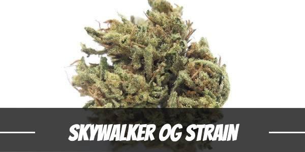 Skywalker OG Strain