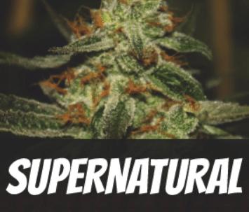 Super-Natural-Strain