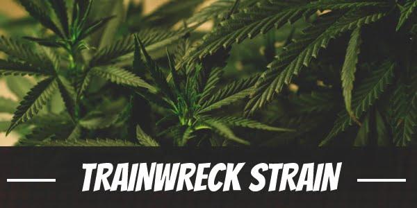Trainwreck Strain