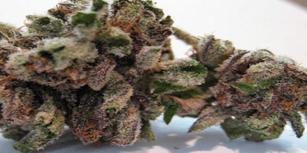 bubba-kush-cannabis-strain