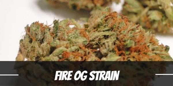 Fire OG Strain