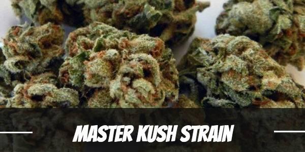 Master Kush Strain