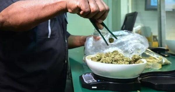 Entry level marijuana jobs in California