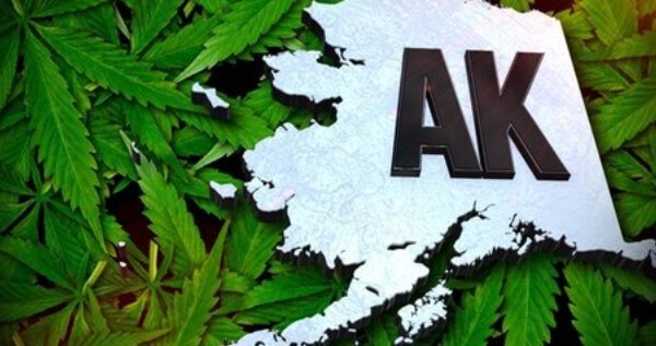 How To Get A Trimmer Or Budtender Job In Alaska