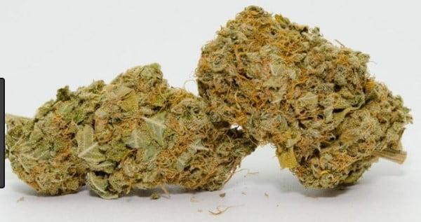 Jungle Juice Strain Review - I Love Growing Marijuana