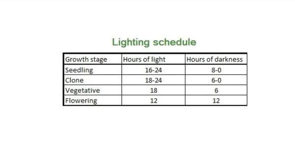 Light Schedule