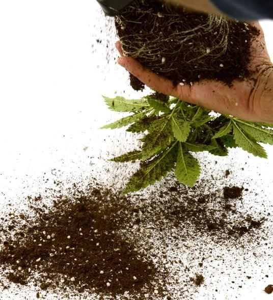The Best Marijuana Fertilizers and Nutrients - I Love