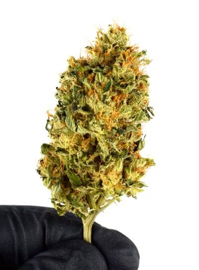 Trimming bud