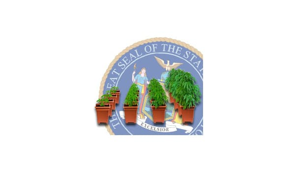 new york cannabis growing