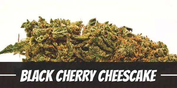 Black Cherry Cheescake Strain