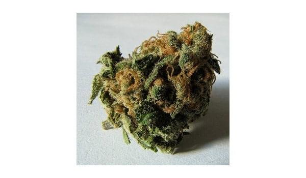 Signs of airy buds marijuana
