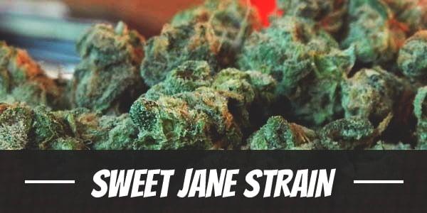 Sweet Jane Strain