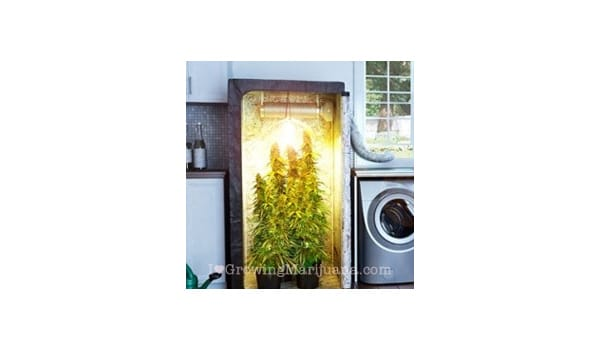 How to Build an Indoor Marijuana Grow Room - I Love Growing Marijuana