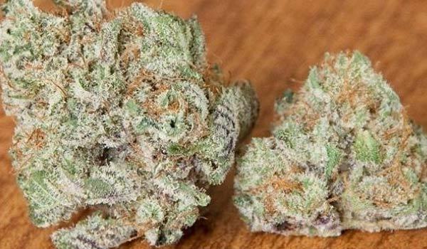 Blackberry x Blueberry Strain Medical