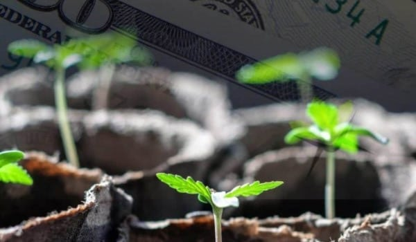 The Costs And Revenues Of Growing Marijuana