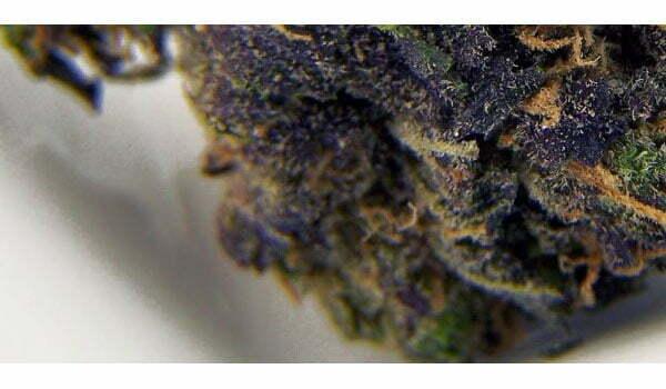 Blackberry Kush Strain Medical