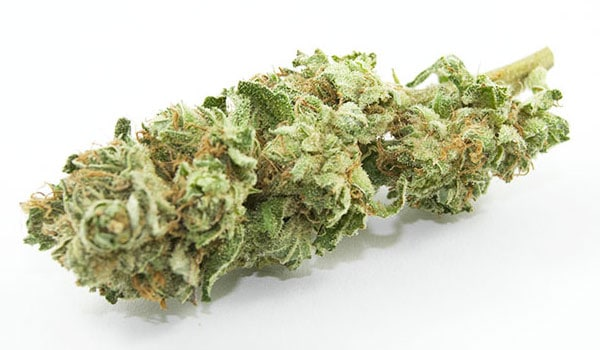 Blueberry Bomb Strain Effects