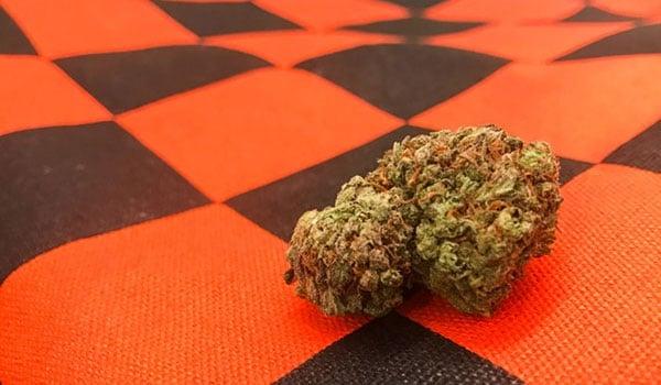 Clementine Kush Strain Medical