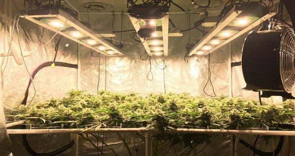 DIY Grow Tent