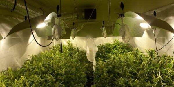 Fans in a grow room