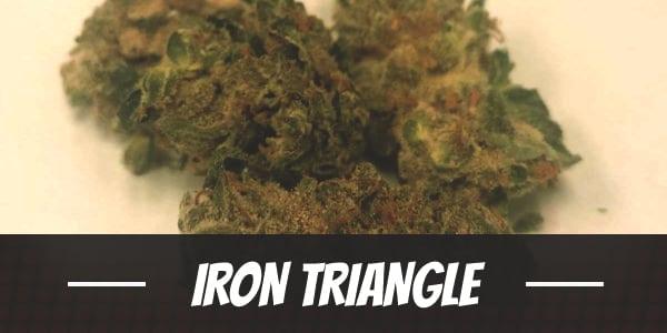 Iron Triangle Strain