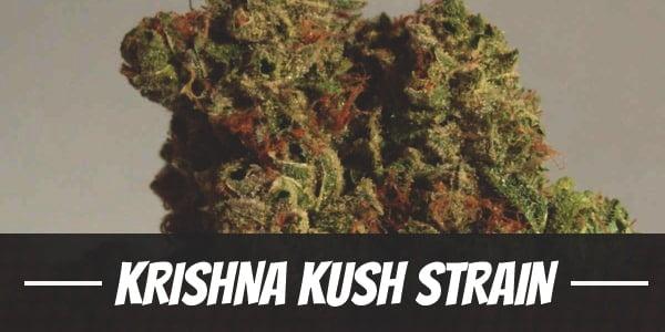 Krishna Kush Strain