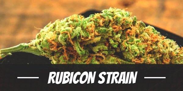 Rubicon Strain