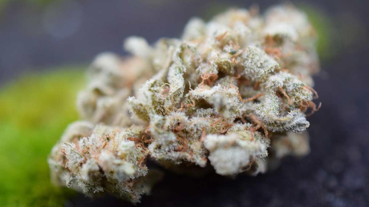 I Love Growing Marijuana
