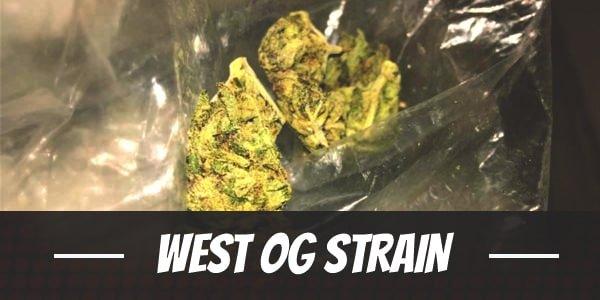 West OG Strain