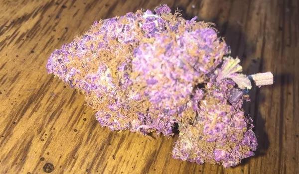 Purple People Eater Strain Medical