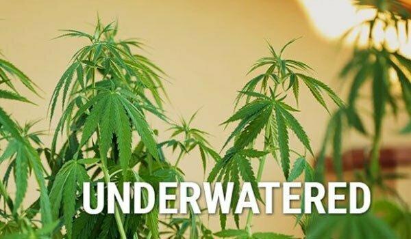 Underwatering