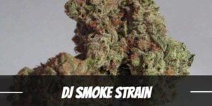 DJ Smoke Strain