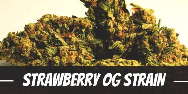Strawberry OG Strain