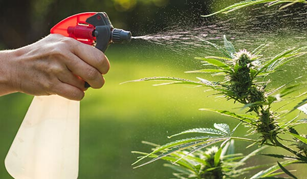 hard or soft water for marijuana plants