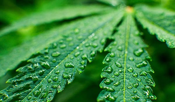 humidity and temperature in your marijuana grow room