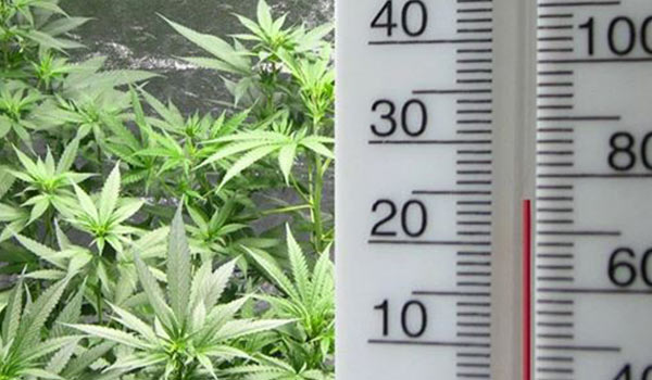 lower temperature growing cannabis