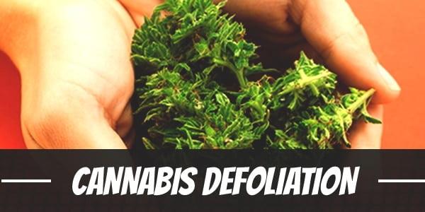 Defoliation 101 – How Careful Pruning Can Improve Your Next Indoor Grow