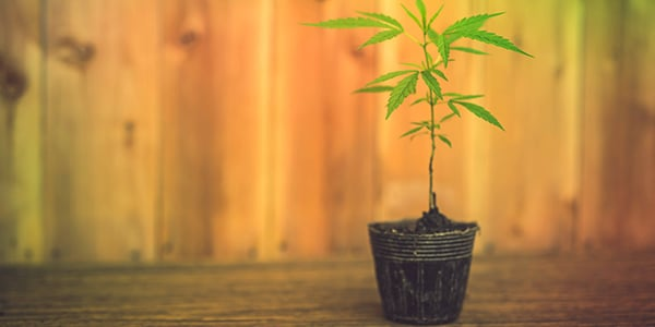 How to Grow Cannabis in a Small Space , Start Your Micro Grow
